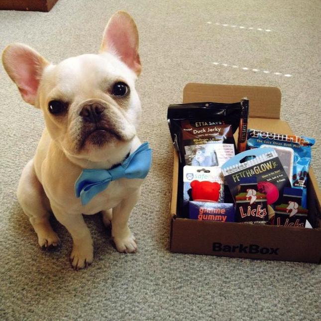 bark box for dog owners via genpink.com